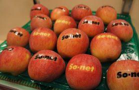 リンゴプレゼントキャンペーン
