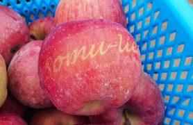 somu-lierリンゴ