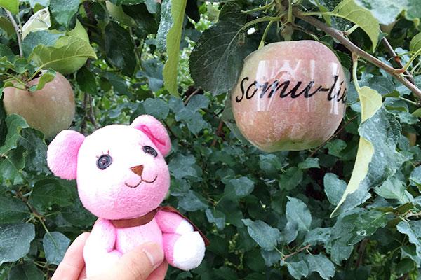 somu-lierシールを貼ったリンゴとモモ
