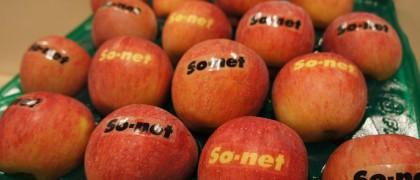 【終了しました】So-netの森から「リンゴ1箱」プレゼント!~あなたの会社のロゴが入ります~